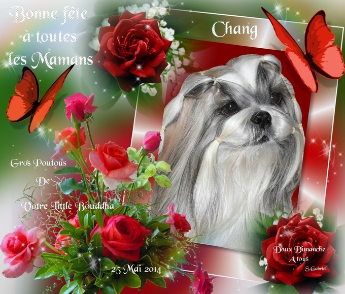 Red roses and me #3 - 15bpg-1or - print