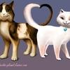 Serafina et Wolfie.. Les chats aussi tombent amoureux!