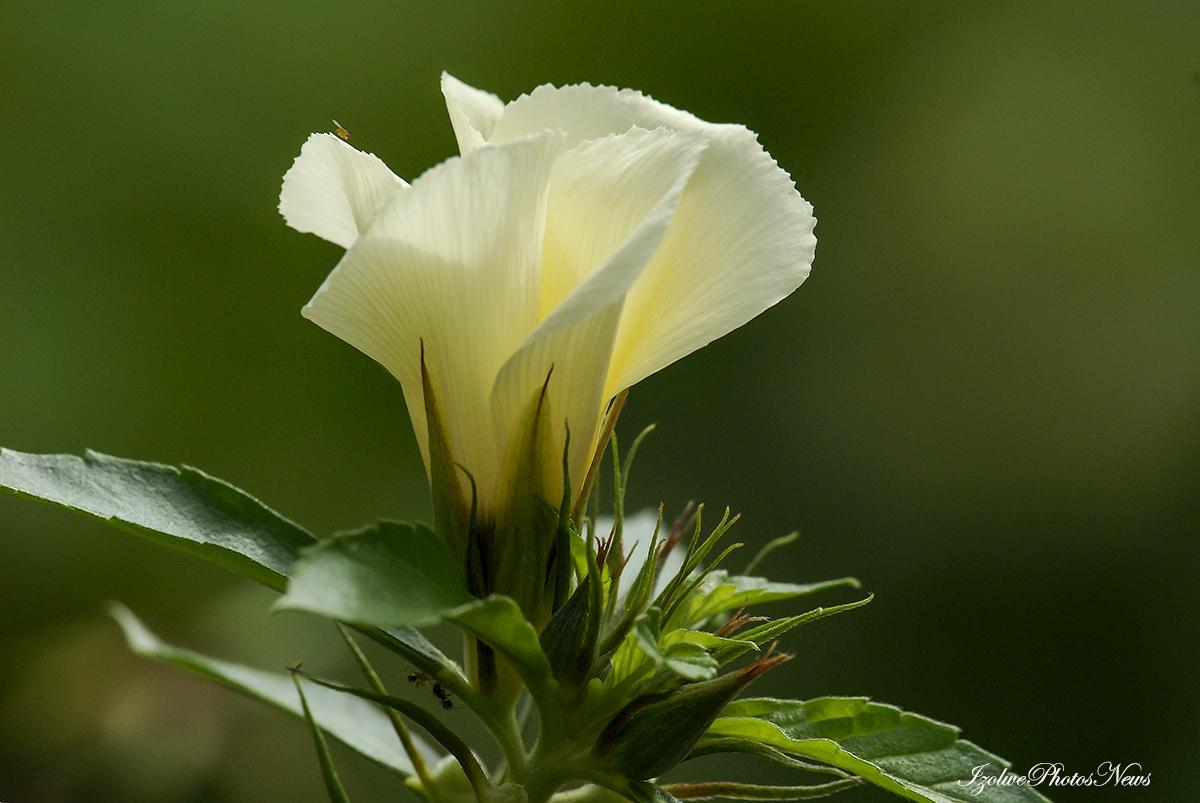 Bon lundi fleuri