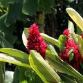 Massif rouge et vert (2) - Photo Yvon