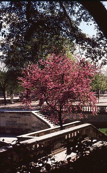117N-15-montpellier-jardin.jpg
