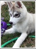 Nouchka (3 mois)