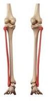0-fp Respiration par les os