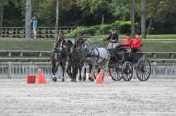 concours amateur 1 attelage . compiègne août 2011