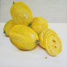 Citrons 50 x 50 cm