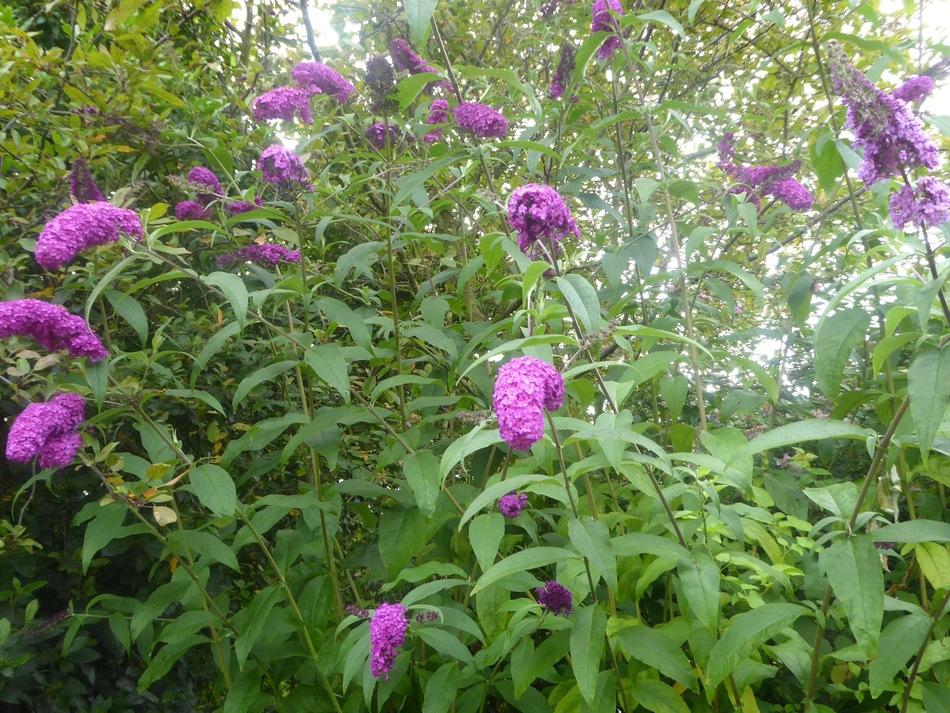 Par mauvais jour d'été le jardin contrarié!