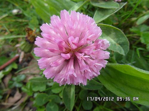 fleurs-du-17-04-004.JPG