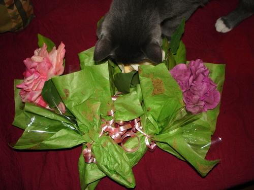 Photographier: la rose de soie