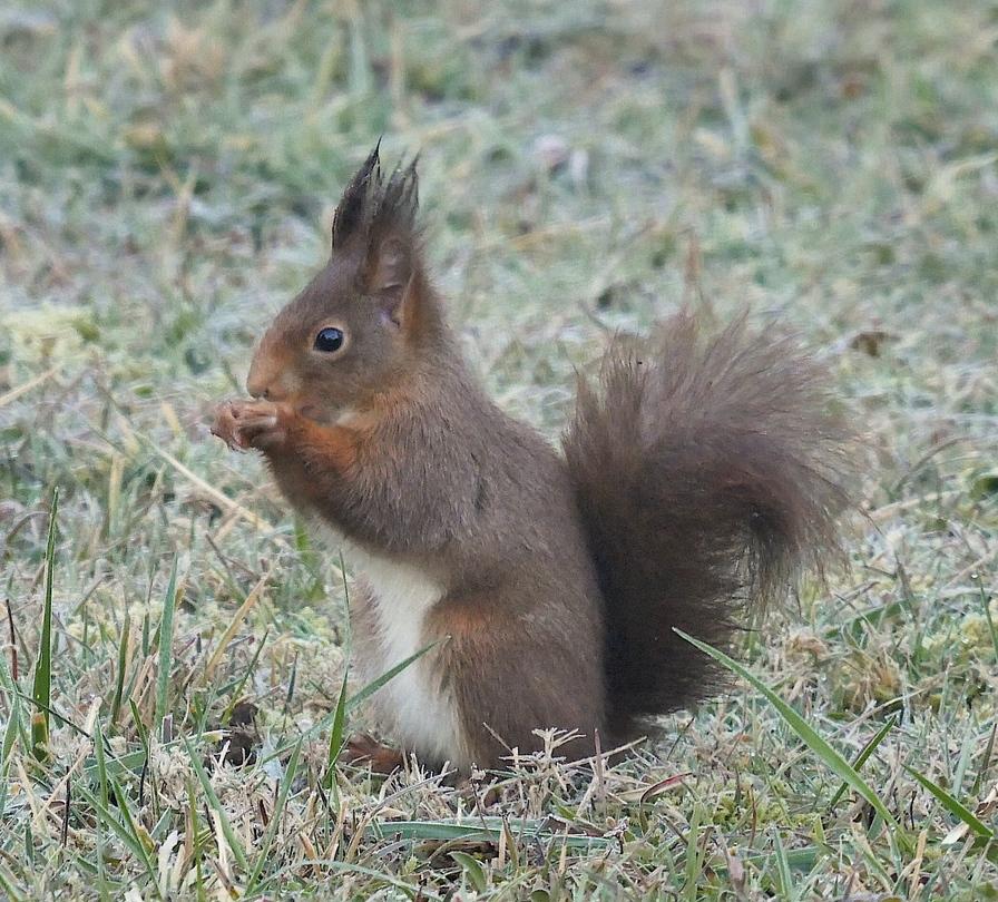 Les quatre saisons de l'écureuil