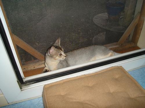 Votre chat en sécurité :