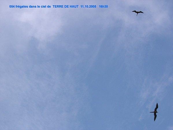 20205-10---TDH-971-LS-027.jpg