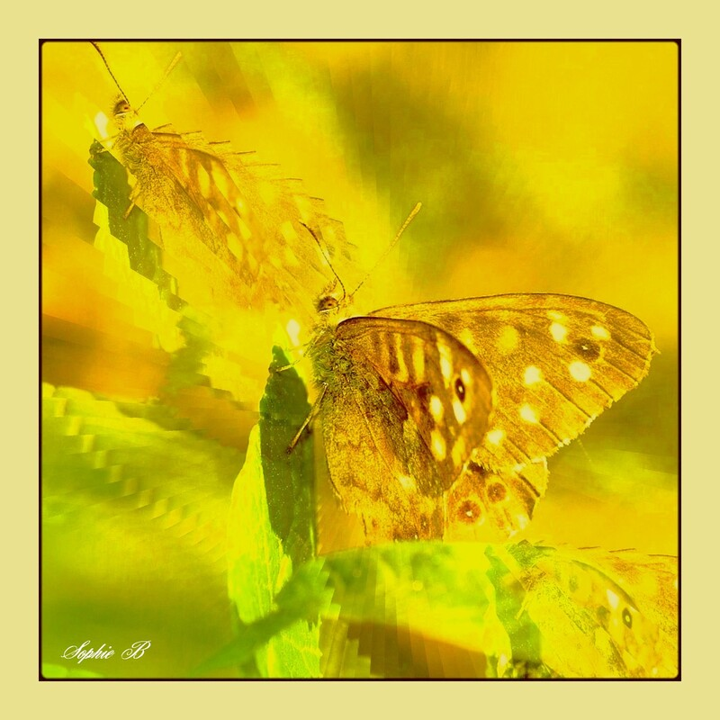 Caresse de papillon .