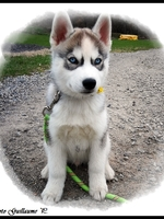 Naïko (2,5 mois)