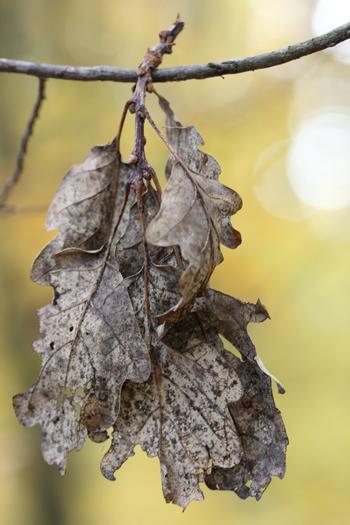 mélodie d'automne (2