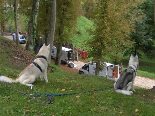 Deux loups à Pierrefonds