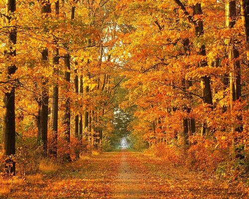 le bel automne esr revenu