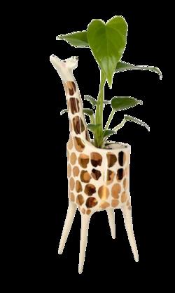 plante verte déco