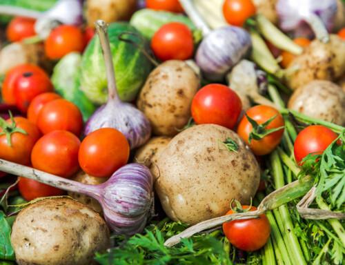 Légumes pour les plus démunis