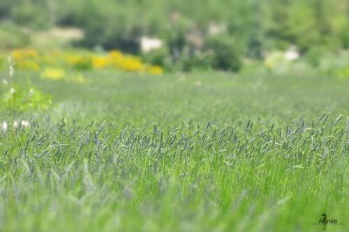 Le soleil faisait craquer les derniers et tardifs bourgeons des chênes sous la pression chaude de ses rayons.