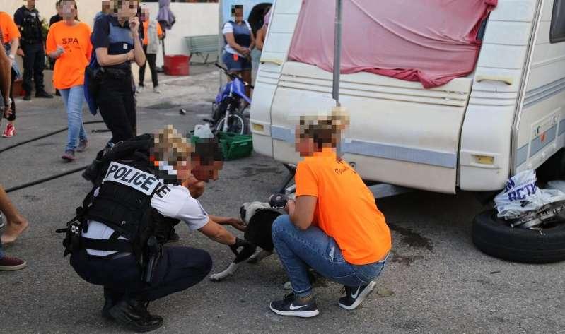 Combats de chiens : coup de filet dans le milieu marseillais