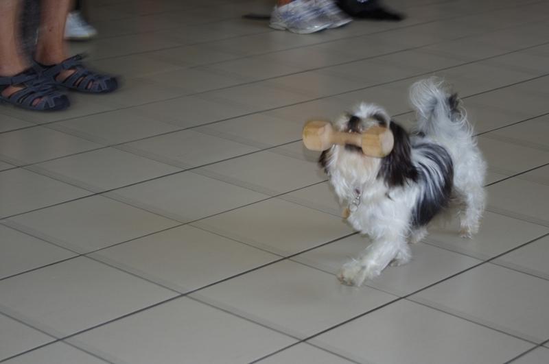 Démonstration canine à la maison de retraite de St Georges d'Oléron