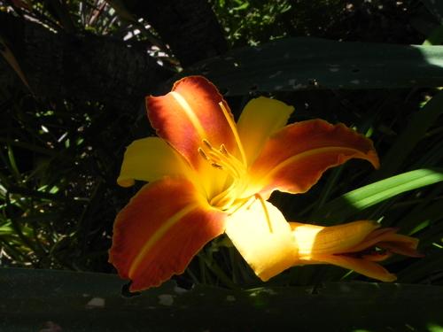 Le jardin en vacances