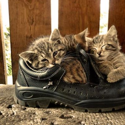 chatons-souliers.jpg