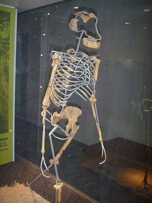 24 novembre 1974 : découverte de Lucy