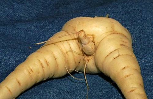 Légumes du jardin...