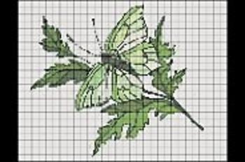 papillonvert