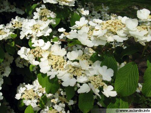 belles fleurs du printemps