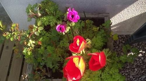 Au jardin cet après midi