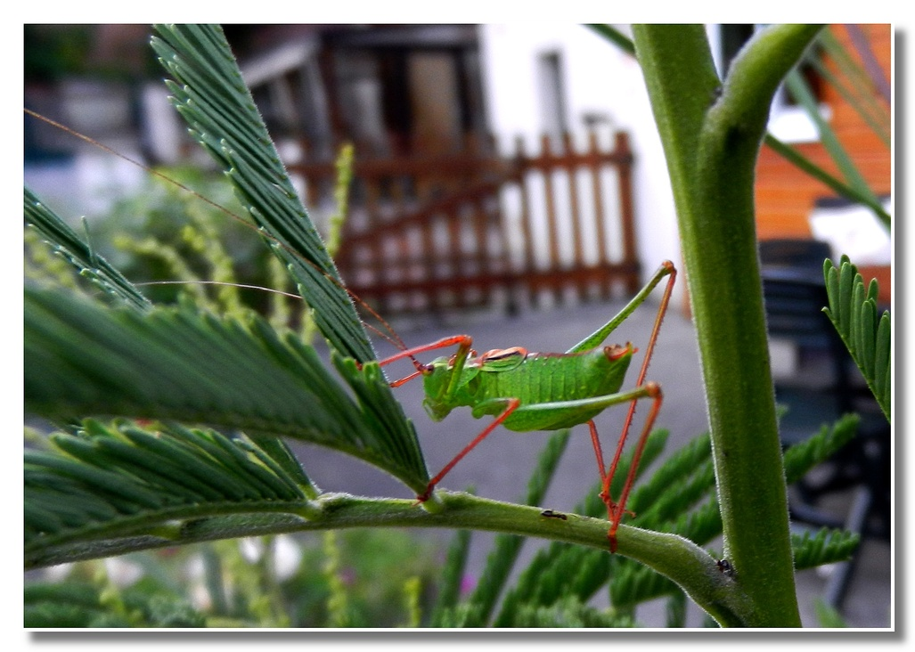 Les petites bêtes de nos jardins