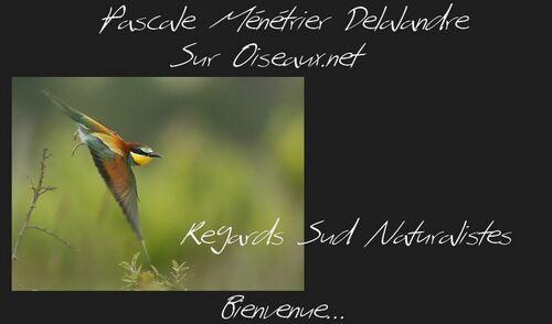 Oiseaux.net (Ma galerie)