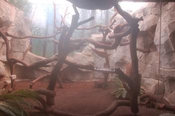 zoo cologne d50 2012 099