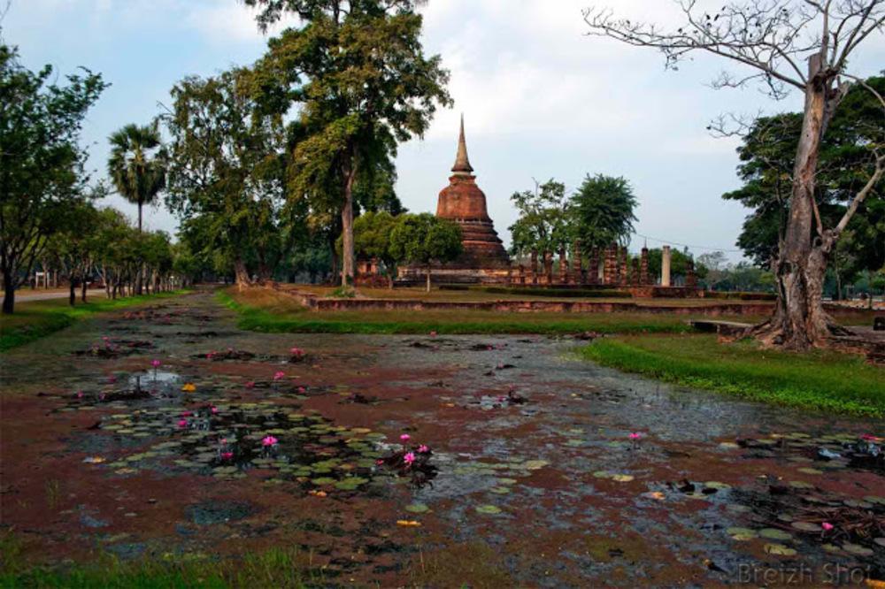 nenuphars ayutthya parc historique