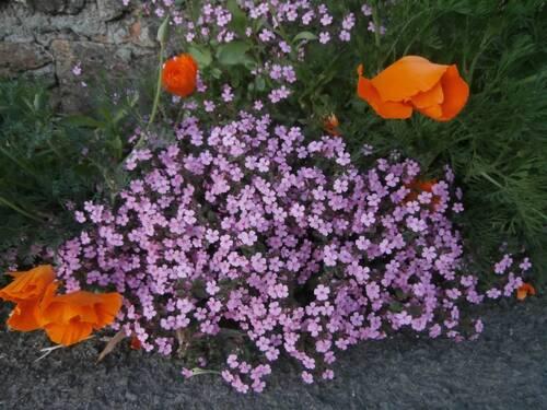 De belles fleurs tout en couleur