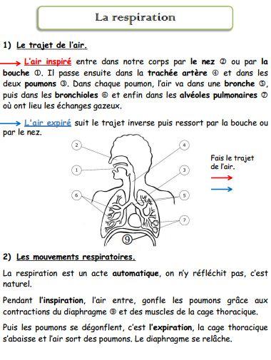 Fabuleux L'appareil respiratoire - Ressources pour les enseignants de CM2 XT92