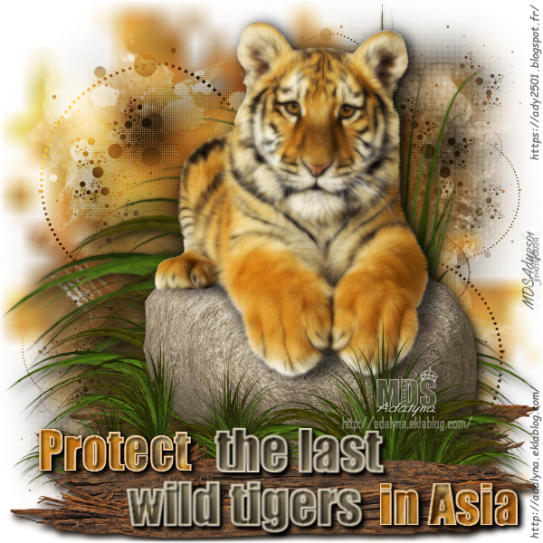Protect the last wild tigers in Asia