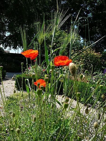 jardin-des-plantes-113.JPG