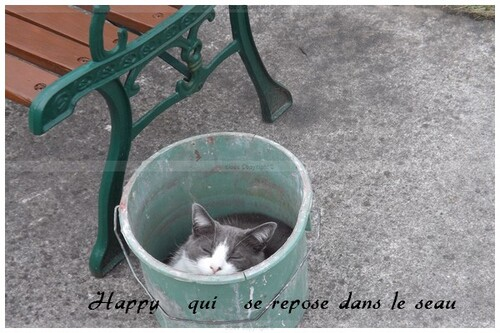 Mes cadres chats