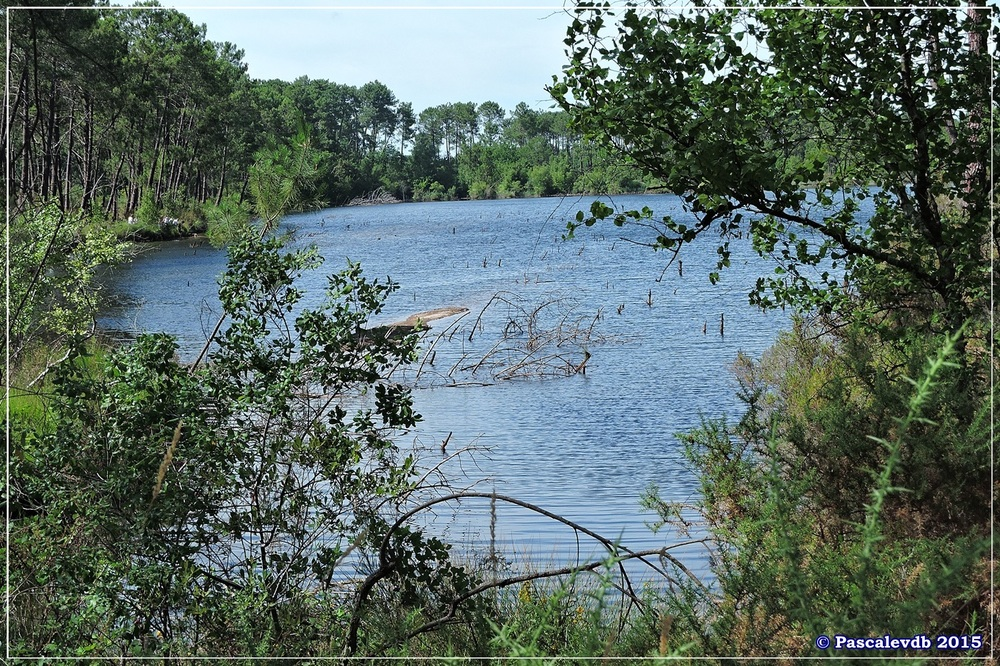 Nouvelle balade au lac du Bousquey - Juillet 2015 - 3/7