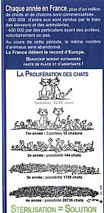 La-proliferation-des-chats.jpg