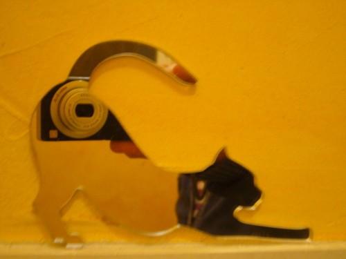 appareil photo en reflet chat