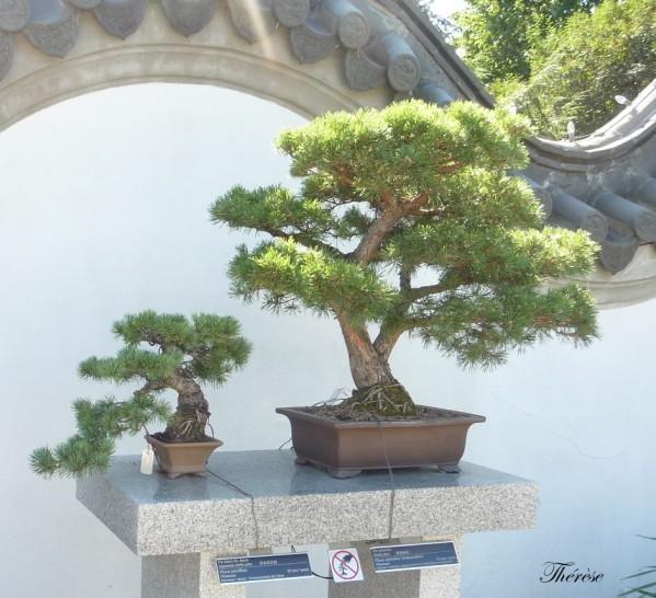 Jardin botanique chinois(51)