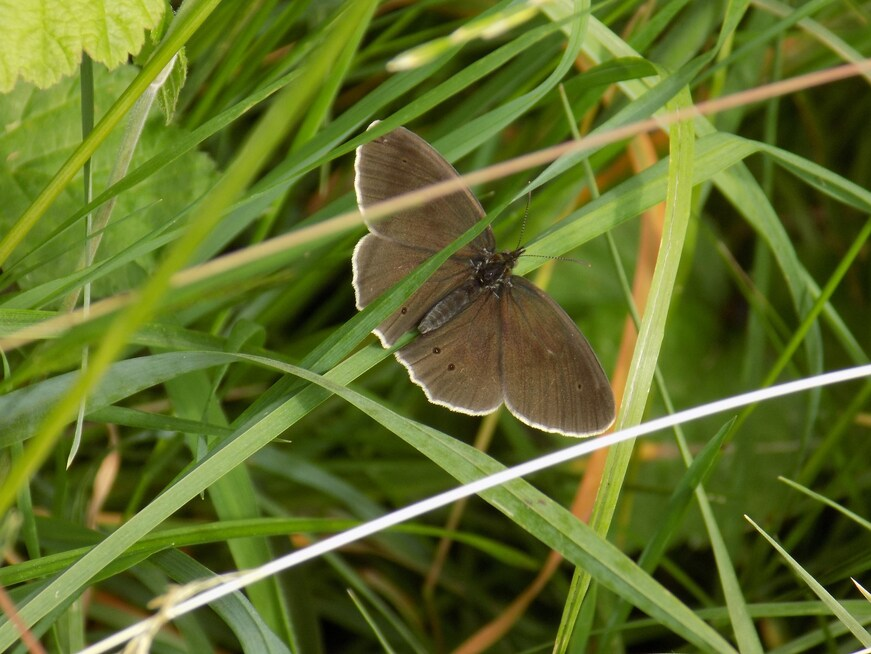 Jolis papillons et Trachnie