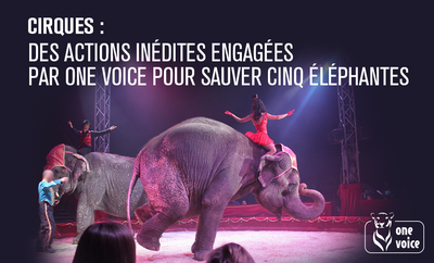 Cinq éléphantes à sauver !