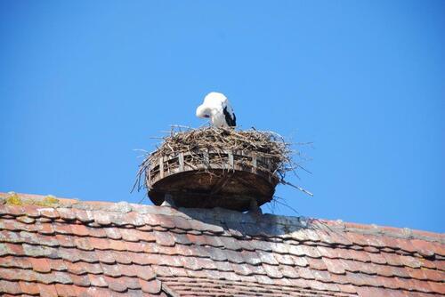 Dame cigogne perchée sur la cheminée