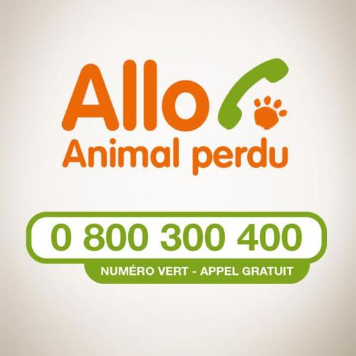 Allô animal perdu : Numéro vert