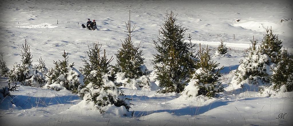 Pistes de ski dans un environnement préservé